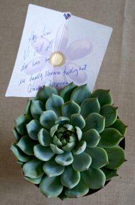 mammaledig-blomma-succulente